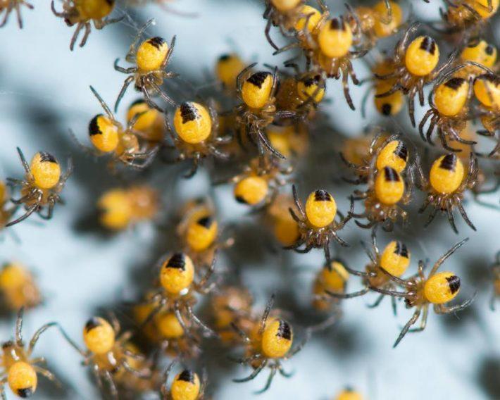 Много маленьких пауков