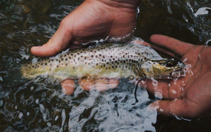 Рыба, пойманная руками