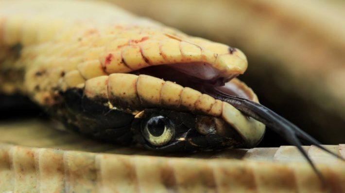 Мертвая змея