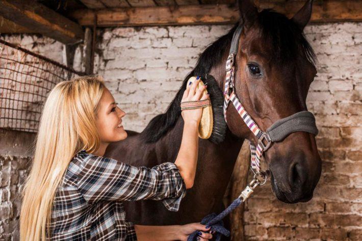 молодая девушка расчесывает лошадь