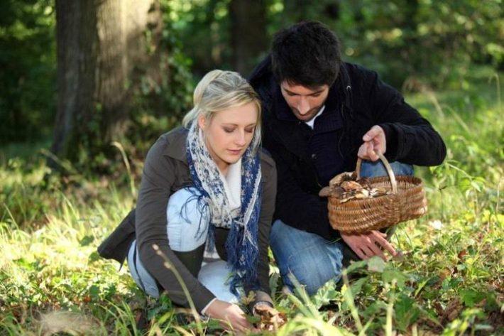 Влюбленная пара собирает грибы