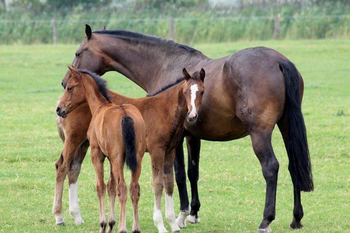 Лошадь и жеребята