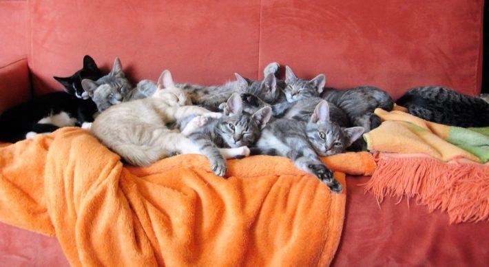 Много кошек на диване