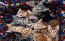 Много котят в коробке