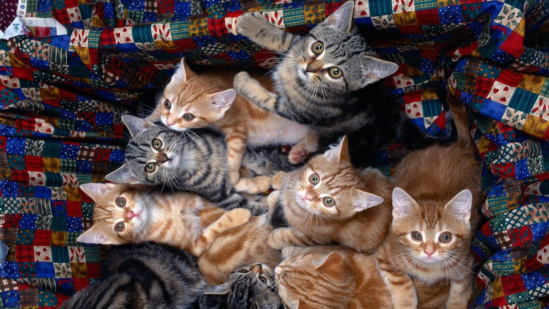 К чему снится много кошек с котятами — женщине и мужчине