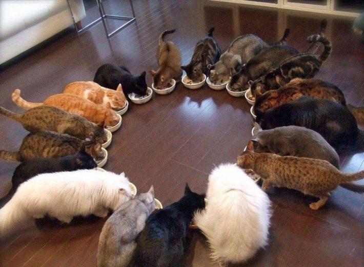 Много кошек на кухне