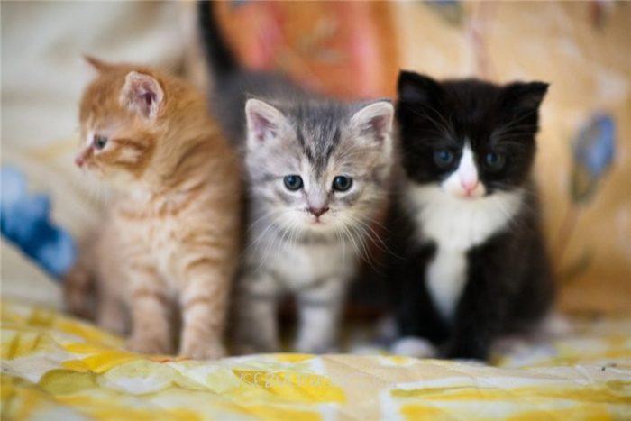 Три разноцветных котенка