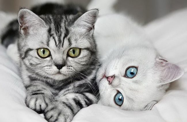 Котята с красивыми глазами