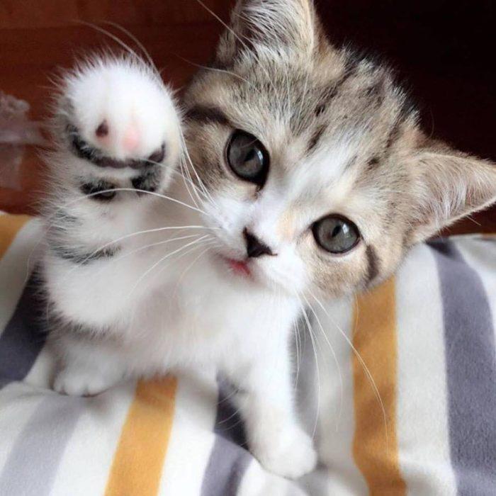 Котенок тыкает лапкой в экран