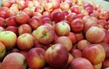 Краснобокие яблоки