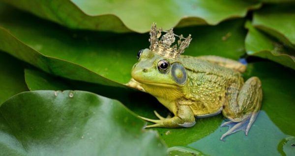 лягушка в короне