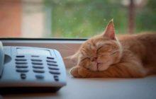 кот у телефона